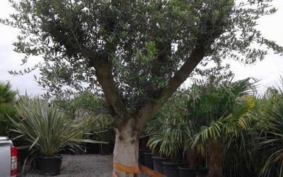 Transporter un arbre